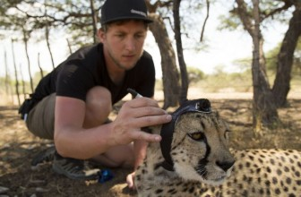 Behind the scenes with the BBC's new Animals with Cameras series